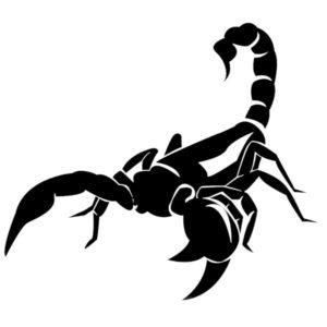 Наклейка на авто Скорпион 14