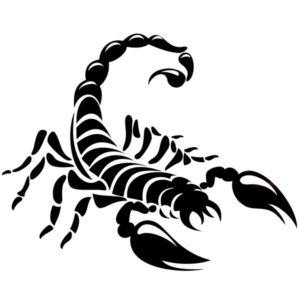 Наклейка на авто Скорпион 12